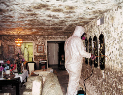 Mold & Water - Enemies of the Home