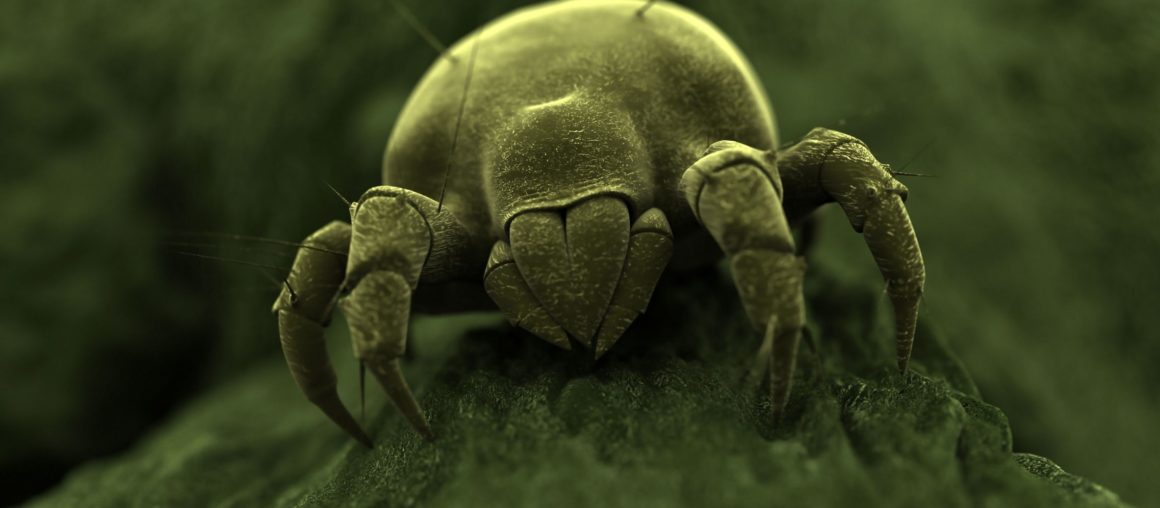 Dust Mites: 5 Fast Facts You Need to Know