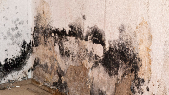 5 tips when dealing with mold in your home (as told by a mitigation company).