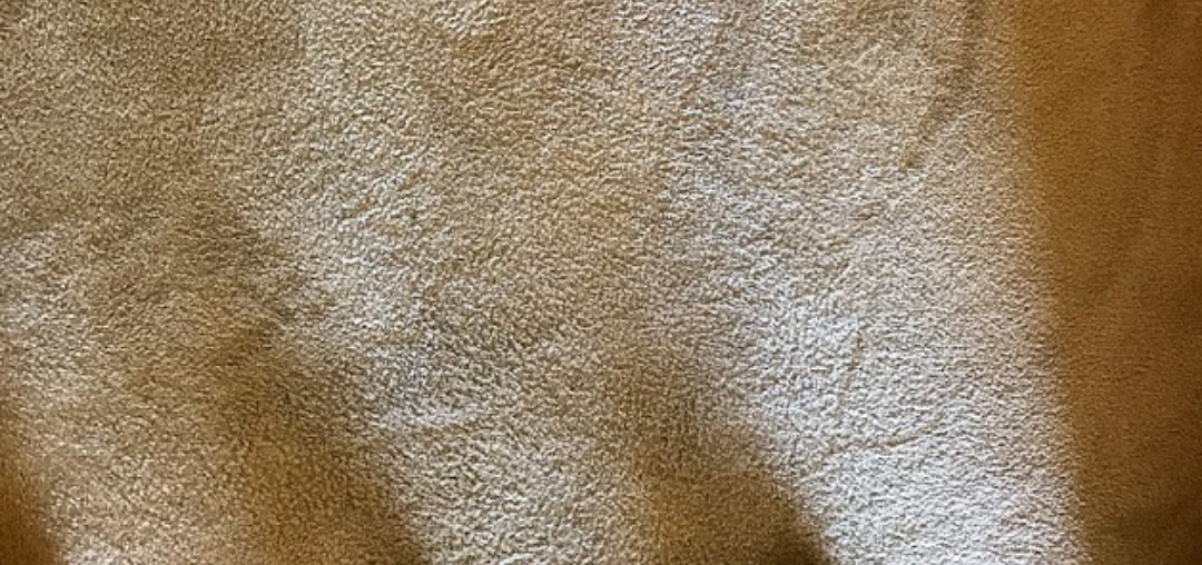 5 Reasons Your Carpet Cleaning Is More Important During the Pandemic