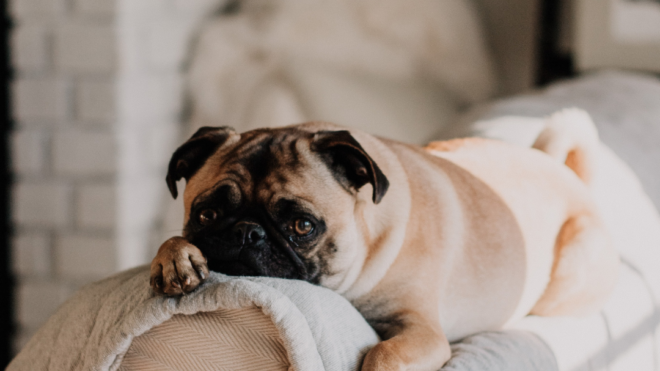 What To Do If My Dog Pees On My Carpet?